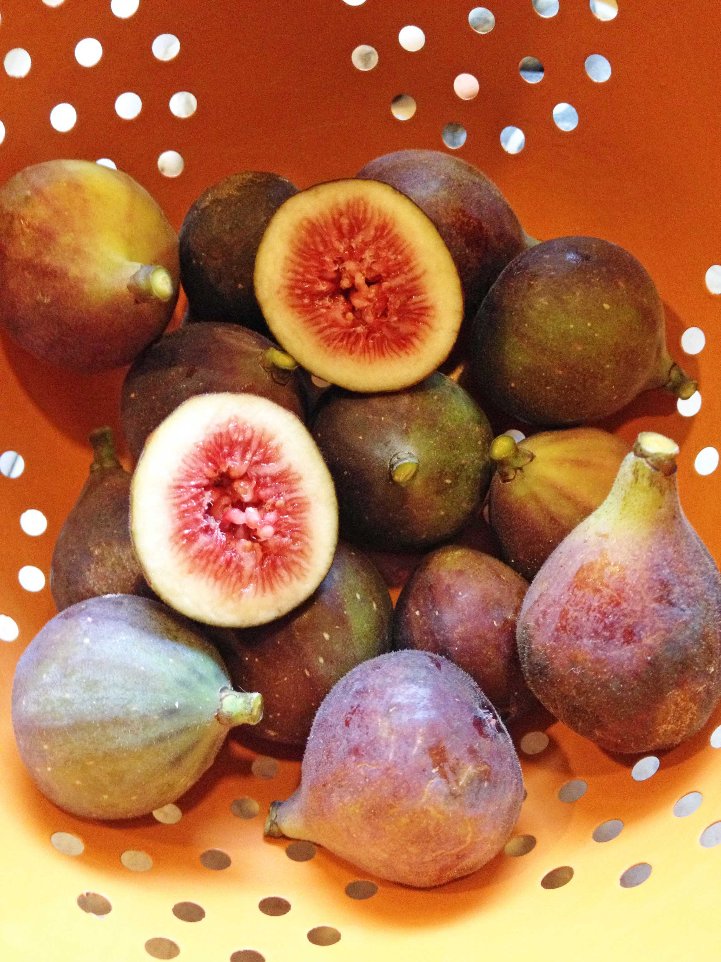 fig photo e smaller